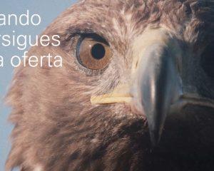 Aguila Endesa